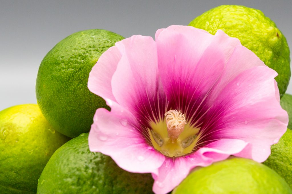 Lime juice can serve as a basic ingredient and is mostly used for sorbets